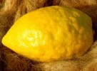 84_etrog