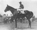 Exterminator, winner of the 1922 Kentucky Derby